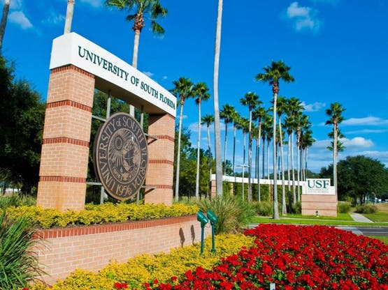 <strong>University of South Florida</strong>