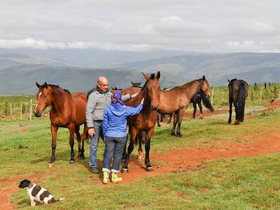 Kruger Horse Project