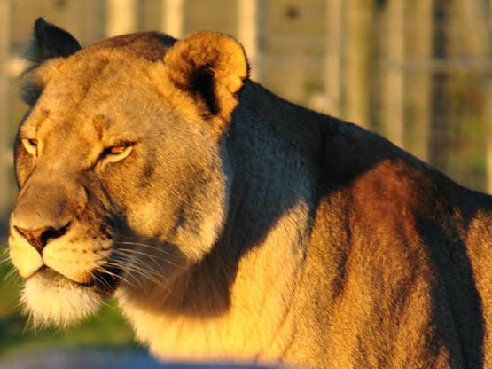 Big Cats Sanctuary