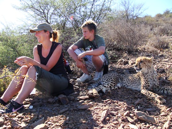Cheetah Rehabilitation