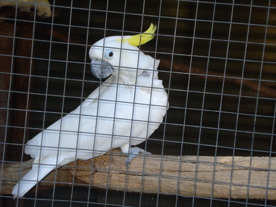 Bird & Primate World