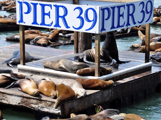 Pier 39. San Francisco, EUA