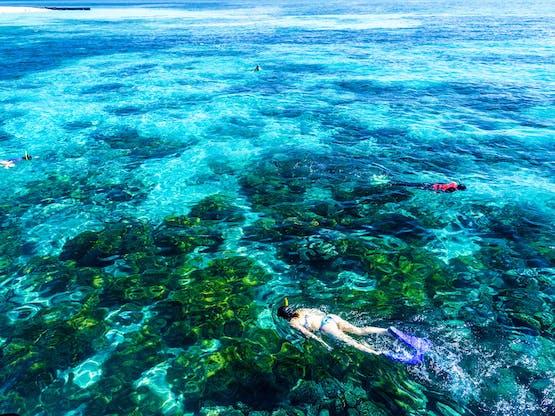 Grande Barreira de Coral. Cairns, Austrália