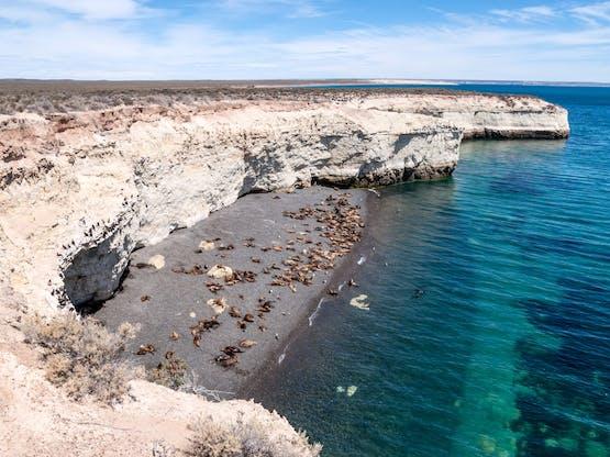 Colônia de Leões Marinhos, Puerto Madryn