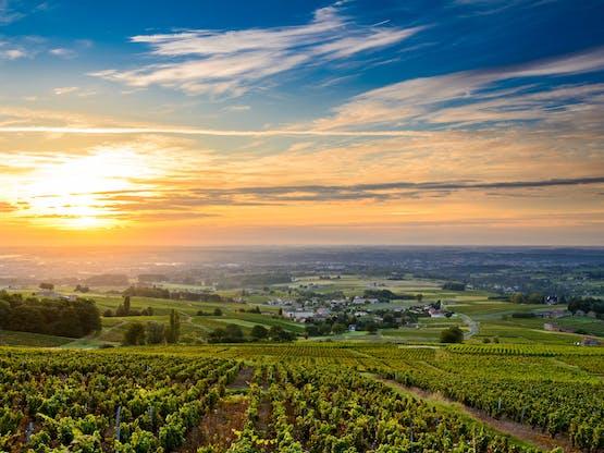 Nascer do sol em vinhedo na França