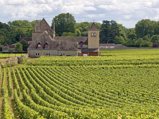 Vinhedo em Burgundy