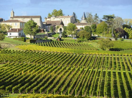 Vinhedos em Bordeaux