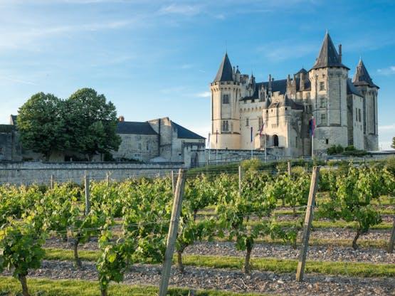 Vinhedo e Castelo Saumur em Loire Valley