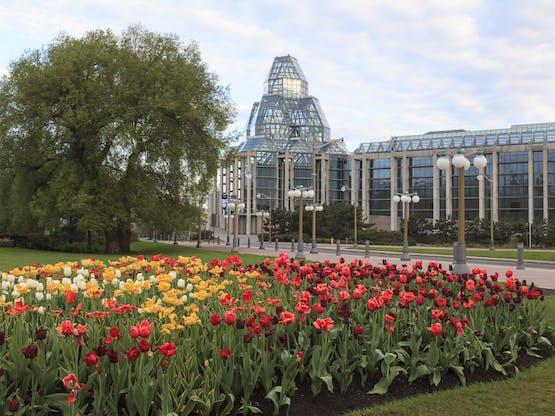 Festival das Tulipas de Ottawa com a Galeria Nacional de Arte ao fundo