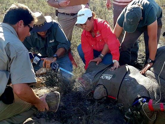 Reserve Conservation - Trabalho Voluntário