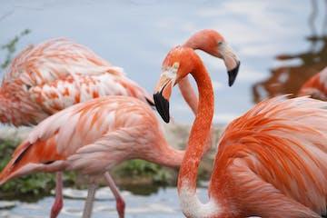 Miami :: Everglades Eco-Adventure Tour