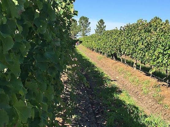 Wine Farm Experience